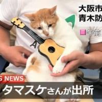 マタタビ使用で逮捕?「逮捕ネコ タマスケ」グッズが発売に