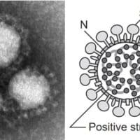 新型コロナウイルスって結局ナニモノ? 怖がる前に…