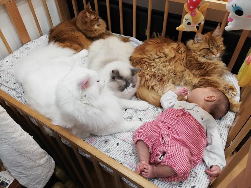 赤ちゃん大好き育ニャンズ 優しく見守ってるつもりが……?威圧感ある見守りに