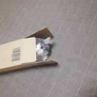 細長い箱の中にズサー! 猫にとって「いい箱」Amazonか…