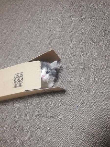 細長い箱の中にズサー! 猫にとって「いい箱」Amazonから届く