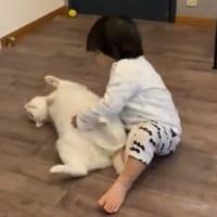 白猫兄貴が1歳児にしか見せない姿 「ボクは弟分のバディなのさ…