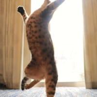 リアル「Cats」の弾ける動き スーパー元気になれそうと評判