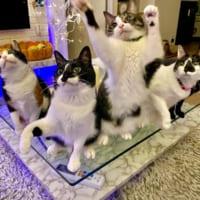 「アベンニャーズ」結成!? 奇跡の集合写真に全猫好きが感動