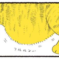 猫のお腹のタプタプこと「ルーズスキン」が大好き …