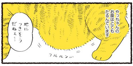 猫のお腹のタプタプこと「ルーズスキン」が大好き でも…容易に触れることは許されない聖域