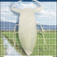 フィギュア「合法タガメ」が発売 標本をCTスキャンし完全再現