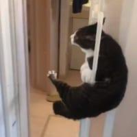天才猫現る お風呂からの華麗な逃亡劇が話題