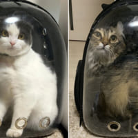 猫の5か月ビフォーアフター キャリーバッグに入った姿で比較すると……