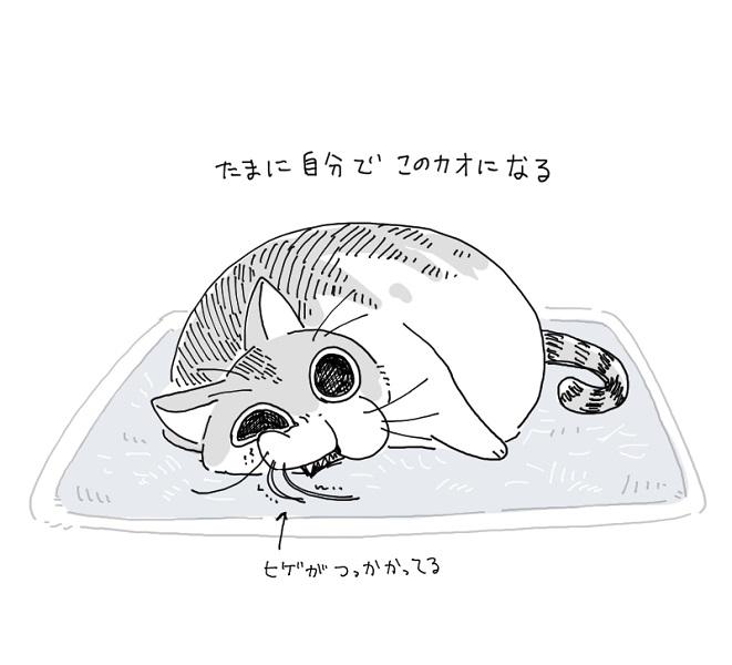 「落ちているヒゲをいじりがち」猫のヒゲあるある