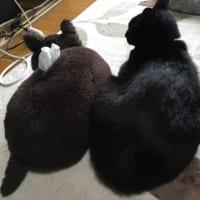 ティッシュ箱と間違われた猫 飼い主に「マーン!!…