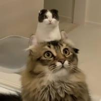 「猫から猫が生えてる!」 奇跡の瞬間をとらえた画像