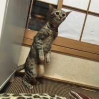 もしかして猫の国へ連れていかれるのかな? 既視感あるニャンコが発見される