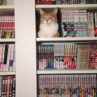 飼い猫が行方不明?→探し回ってやっと見つけた場所が……