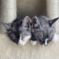 遊び疲れて電池が切れちゃった? 子猫たちの天使な寝顔にほっ…