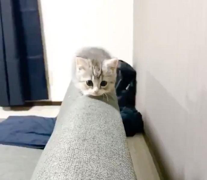 ゆっくり近づいて来る子猫にキュン死