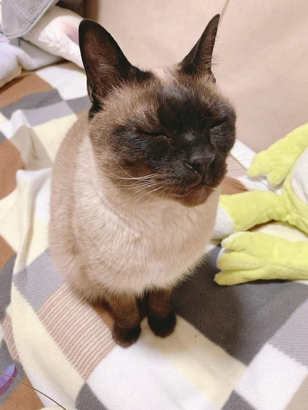 撫で待ち顔の猫に悶絶 ススン……「撫でていいよ」