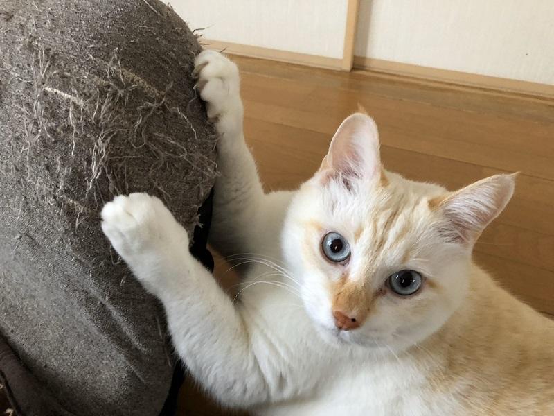 猫にまつわる不思議なお話 「生まれ変わったらうちにおいで」→数日後にケガした子猫が