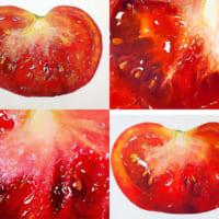 え?絵ー? 繊細なタッチで描かれたトマトの絵にビックリ