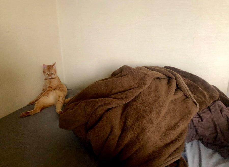 「なんで遊んでくれないの……?」 やさぐれ猫が可愛すぎる
