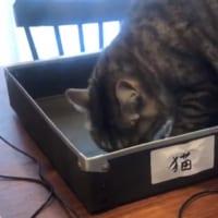 リモートワーク時の箱の活用法 これで猫も満足らしい??