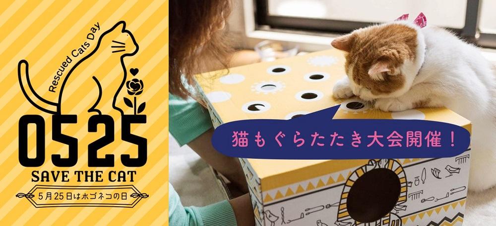 楽しみながら猫助け 保護猫支援イベント「ねこもぐらたたき大会」開催