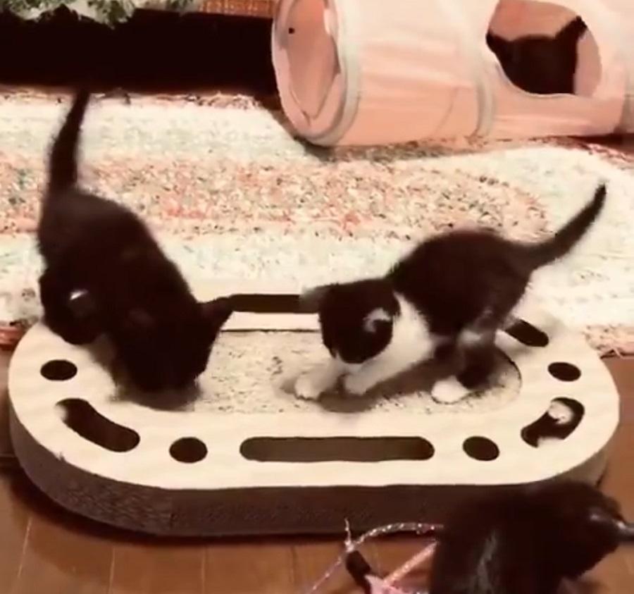 実家が子猫パラダイス! 帰省を我慢したら癒やし映像が届いた件
