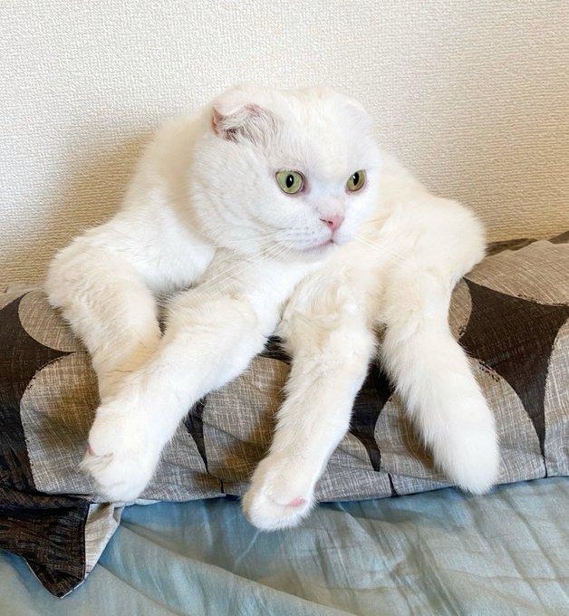 猫が巨大な白タランチュラに変身!?