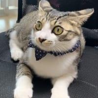 マスク姿の飼い主に警戒する猫さん 「だれ…?お前飼い主じゃ…