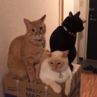 愛猫の「3密」状態に飼い主はなすすべなし?
