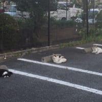 猫たちの「ソーニャルディスタンス」に思わずにっこり