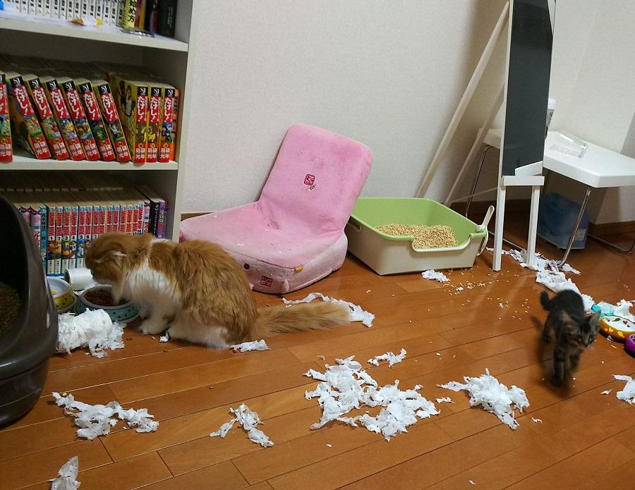 思考停止……愛猫の過ちエピソード 仕事から帰ると床一面にトイレットペーパー