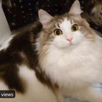 動揺が顔にでまくりな猫 禁じられた洗濯機に侵入→飼い主に発…