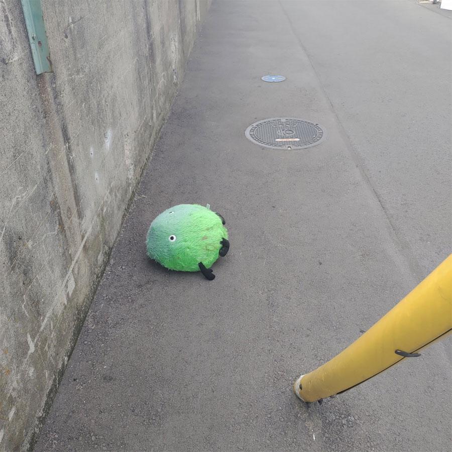 道を歩いていたら行き倒れたスーモに遭遇 保護した話に心温まる?