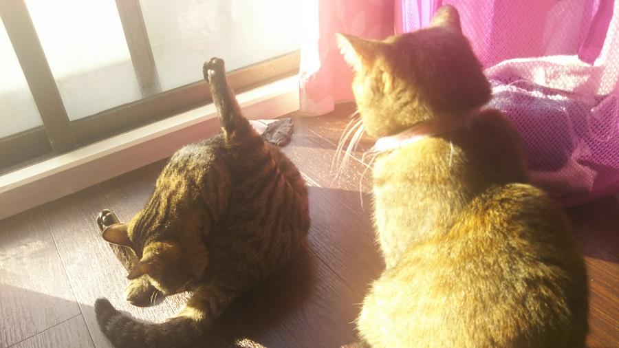 【猫と編集部】可愛いクセして変なところで賢い猫たち