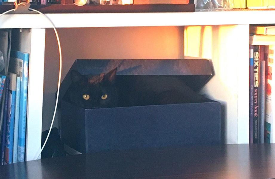 猫がいじらないよう大事なものを箱に入れた結果→猫も入るオチに「らしい話」とみなほっこり