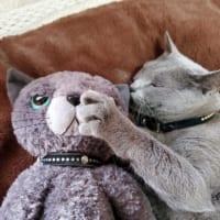 ぬいぐるみをぎゅっ! 抱きしめて幸せそうな猫に「…
