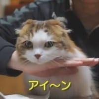 志村けんのものまね?「猫がアイ~ン」するまでの変遷が可愛す…