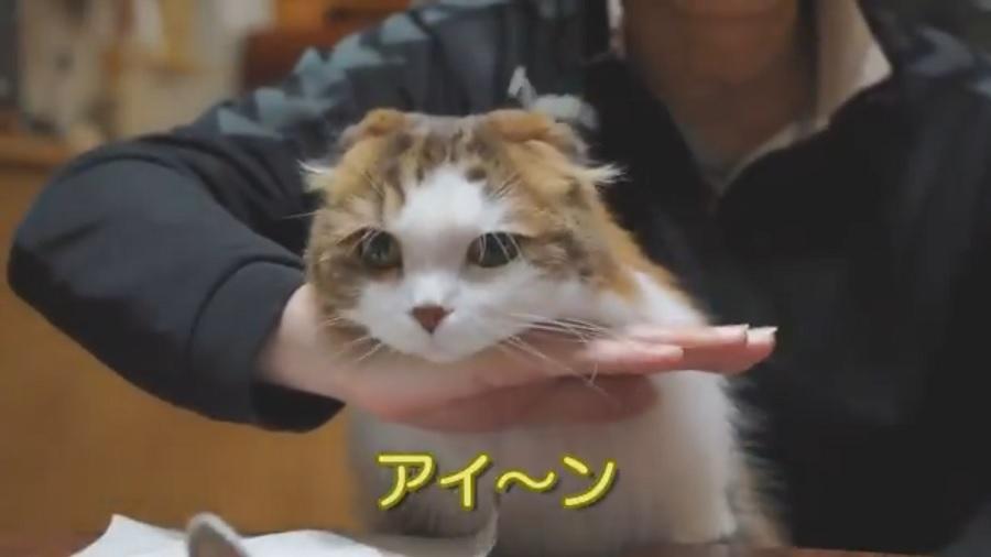 志村けんのものまね?「猫がアイ~ン」するまでの変遷が可愛すぎて話題に