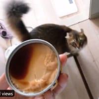 「おい!それ猫缶だろ!」プリンを猫缶と勘違いした愛猫が永遠に追いかけてくる