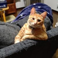 「ここ座って話そうや」 可愛い猫がまさかのオッサン化