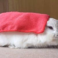 お寿司のようなウサギが美味しそうだけど可愛くて食べられない!