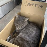 雨宿り猫VS千光寺山ロープウェイの攻防 担当者の思いやりに…