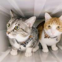 ミュージックビデオ感ある猫写真に「ジャミロクワイ?」の声