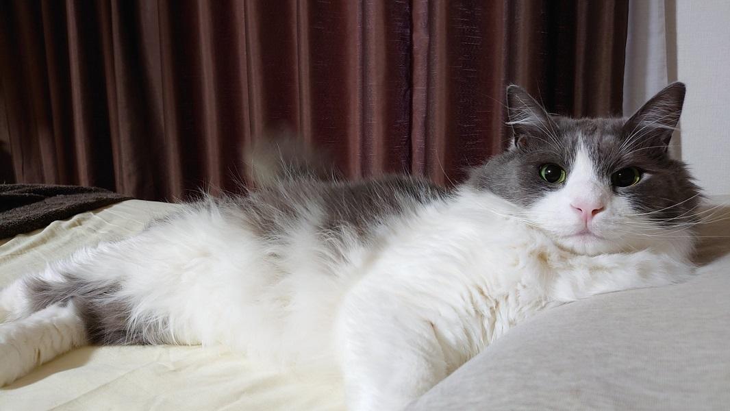 「起きた?」 目が覚めたら猫がイケメン彼氏風に見つめていた