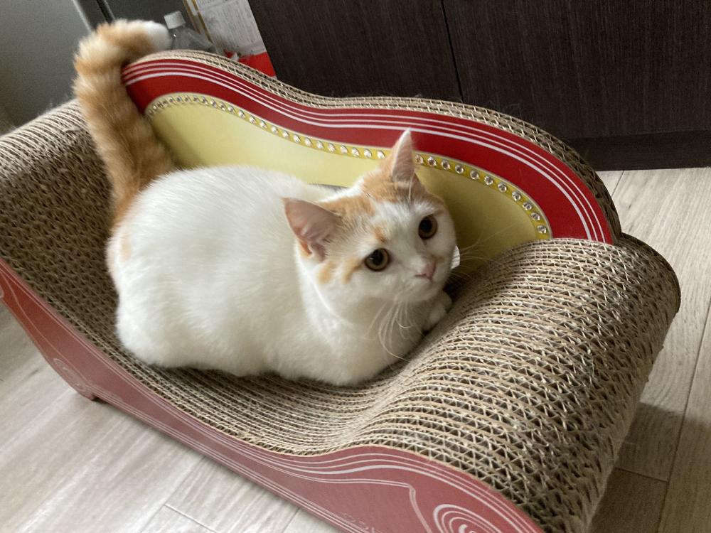夢で逢えたらホントに逢えた!憧れの猫のいる暮らし