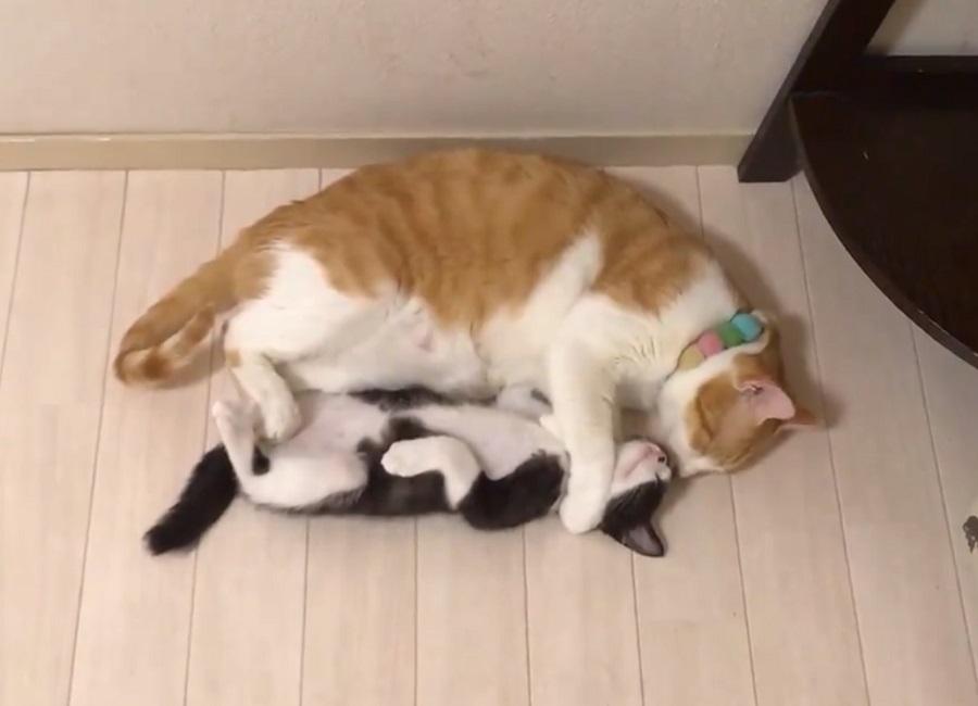 「かわいいなぁ」ペロペロ……猫のグルーミング動画にとろけそう