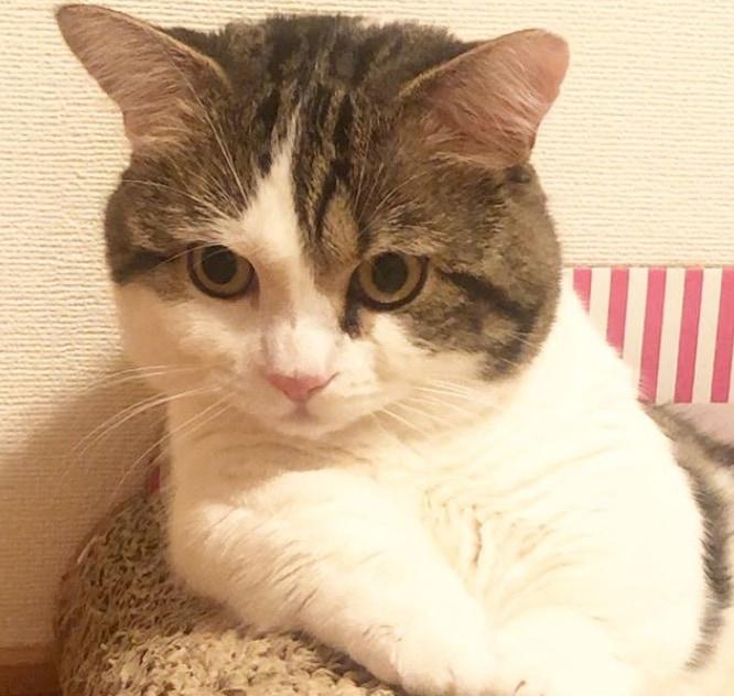 「あっ、おれ猫だった!!」 ふと我に返る猫ちゃんの姿が多くの人を魅了