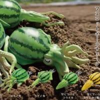 西瓜とイカを融合させた「野菜の妖精 すいか」?イカの胴体が西…