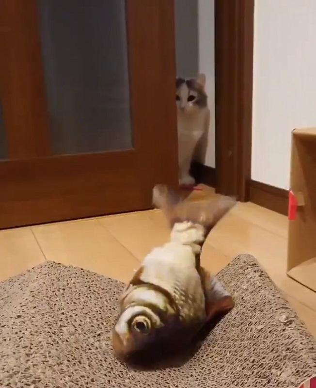 ニャ政婦は見た? 動く魚のおもちゃにドン引きする猫